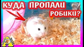 КУДА ПРОПАЛИ Хомки РОБАРОВСКОГО? / УБОРКА МЕГА СТЕЛАЖА Хомяка / СИЛЬНО ВОНЯЮТ? / Alisa Easy Pets