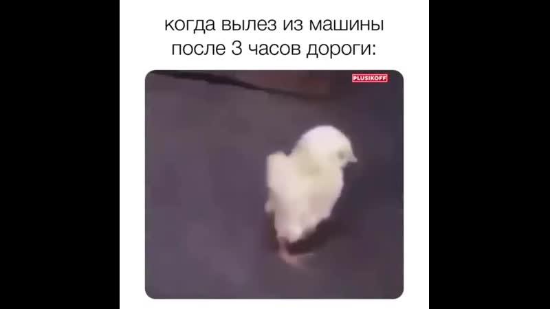 Белі аурп қапты😂