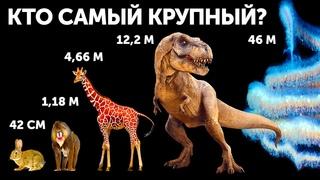 Кто самый крупный из животных (И это не кит!)