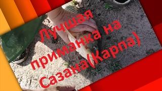 На что ловить Сазана. Ловля сазана на жмых в Астрахани. Лучшая приманка на Сазана.