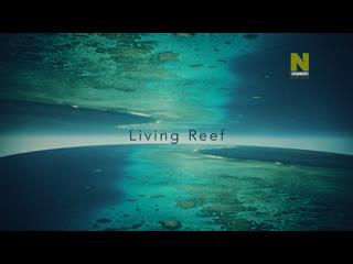 Большой Барьерный риф: Живое сокровище - Чудо жизни   1 серия из 4   2020   HD 1080