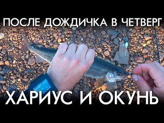 РЫБАЛКА ПОСЛЕ ДОЖДИЧКА В ЧЕТВЕРГ / ХАРИУС И ОКУНЬ