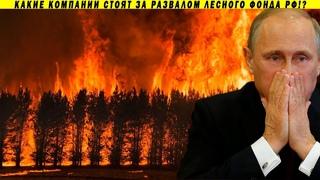 Российские леса отданы компаниям США!? Пожары, олигархи и Песков