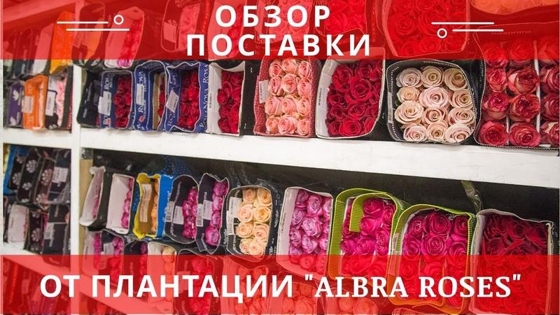 Эквадорская плантация Albra Roses Видео обзор роз с поставки Поставщик цветов оптом в России