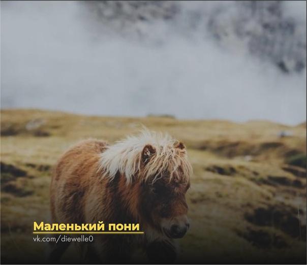 Маленький пони Маленький пони всегда верил, что он - настоящий боевой конь. В своем лошадином детстве он стоял в стойле и украдкой смотрел на всех этих чудесных коней. «Скоро я стану большим и