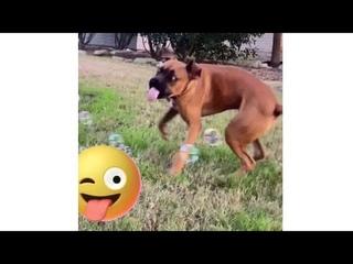 Смешная Собака Пытается Словить Мыльные Пузыри! 😂Улыбнись! Позитив!
