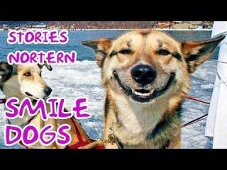 Smile dogs - Stories Northern Christmas marathon