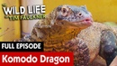 Как приручить комодского дракона / How To Train Your Komodo Dragon   S2E14   The Wild Life of Tim Faulkner