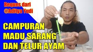 Alan Kribo -Madu Sarang Campur Telor Ayam Kampong dan Manfaatnya
