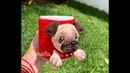 Como tejer aplicación perro pug, amigurumis by Petus (English subtitles)