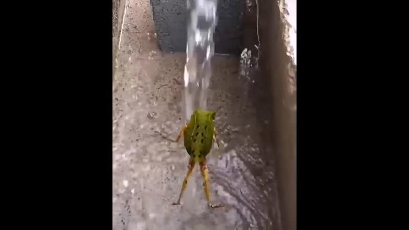 лягушка танцует нереальный танец в душе прям как я🤣🤣🤣