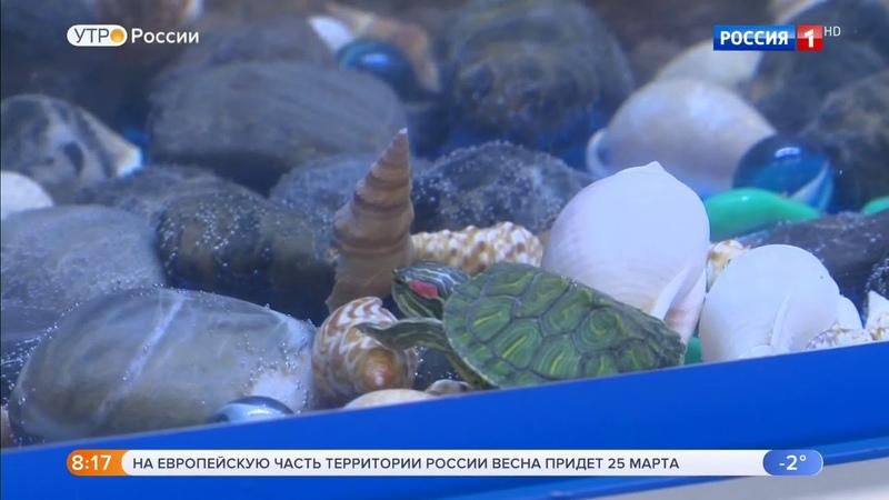 Красноухих черепах спасут от истребления, передача Утро России » Freewka.com - Смотреть онлайн в хорощем качестве