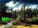 Ja do lasu nie pojade I will not go into the forest biesiada
