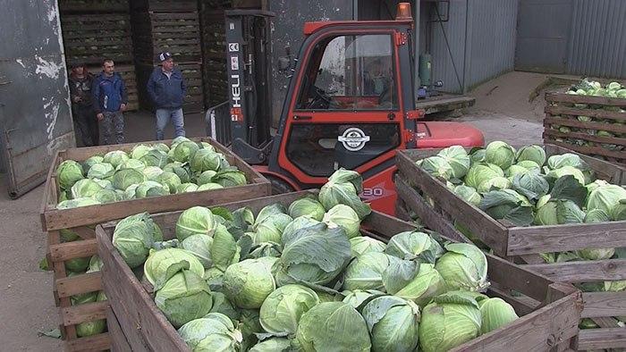 В «Куликово» продолжается уборка урожая