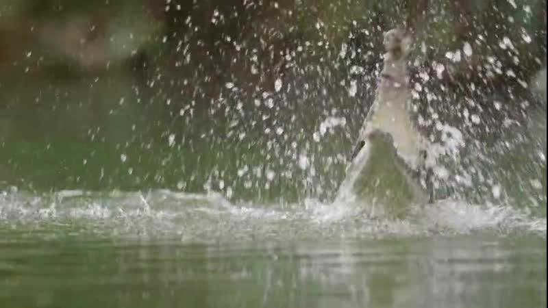 ВВС В краю муссонов 1 серия В ожидании дождя