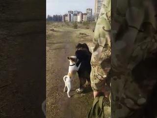 Домашний Пабло-Балу и четырёхлапый массажёр)))