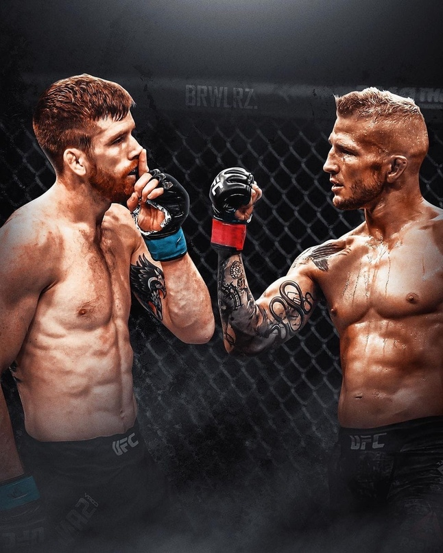 TJ Dillashaw addressed a message to the bantamweight  division of the UFC