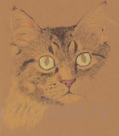Кот. Пастель.