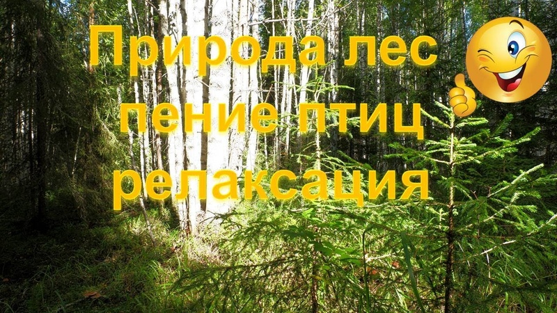 Природа лес пение птиц релаксация