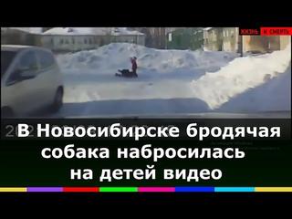 Огромная собака напала на маленьких девочек в Новосибирске,бездомная пыталась загрызть ребенка видео