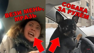 "Пассажирка ""Вези меня, мразь"" и собака за рулём.  (с матом 🔞)"