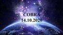 C.O.B.R.A. - Обновление боевой операции (14.10. 2020)