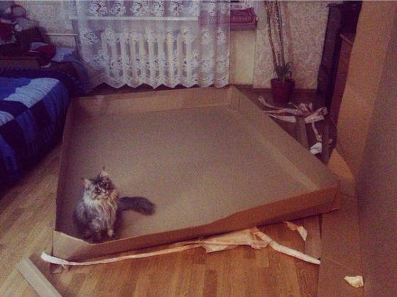 Koшачье счастье
