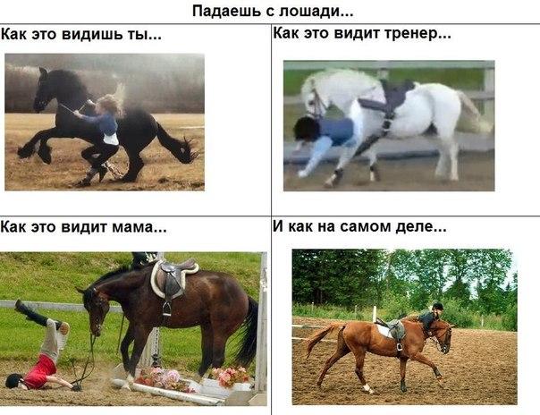 воздушная нежная стихи про конный спорт до слез был успех