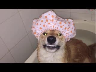 Как надо ванну принимать (ВоК)