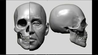 Zbrush Facial Anatomy Tutorial