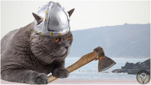 Какими были коты викингов Оказывается, викинги очень любили котов. То есть они, бывало, массово забивали их на шкуры, но зато нередко брали с собой в путешествия и гоняли с ними по всей