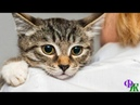 Бесценный Мистер Икс 2 «Всё из-за тебя! Пшел вон!» - Инесса грозно притопнула ногой на котёнка
