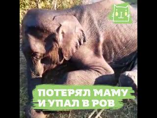 Слоненок потерял маму и упал в ров
