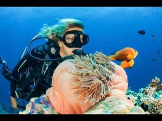 GIANT GROUPER/THAILAND KOH TAO/ ORFOZ/RIESENZACKENBARSCH/ ГИГАНТСКИЙ ОКУНЬ/ماهی گروپر/video by MOHA