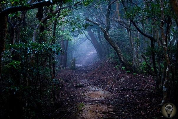 «Бермудский треугольник» Трансильвании самое страшное место в Румынии Лесной массив Хойя-Бачу прозвали «бермудским треугольником» Трансильвании. Слово «хойя» обозначает «пастух», а «бачу» имя