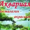 АКВАРИАЛ Аквариумные рыбки, креветки, растения,