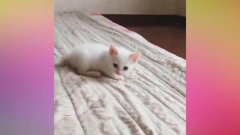 Забавные и милые коты - Самое пушистое видео