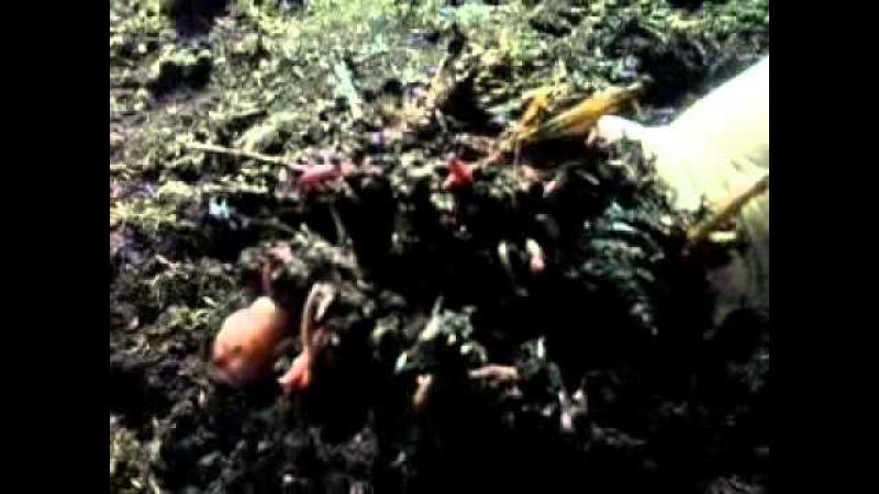 Вермиферма Калифорнийского червя под Киевом