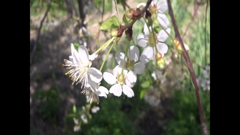 Музыка Ясинского Весна Cкленные ролики красивое видео природа