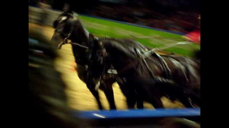 Szimultán fogathajtó verseny 3 Lovas Világkupa 2009