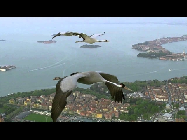 HD BBC Earthflight Cranes Over Venice Italy