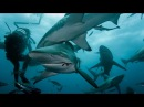 Divers Swarmed By Group Of Sharks During Bait Dive