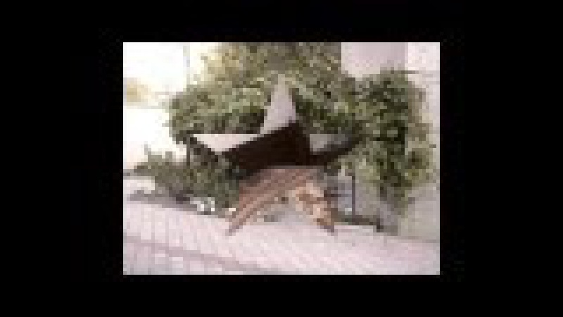 Mitropolit Gurie Grosu 30 Telecentru Chirie 1 2 casă 3 nivele 180m2 = 460 ye luna