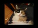 Моя кошка Мася)