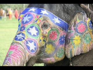 Слоны Индия (праздник слонов в Индии) - elephant festival in India