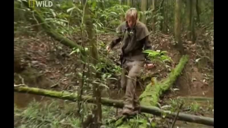 National Geographic Охотник на пресноводных гигантов 2011 Амазонский великан