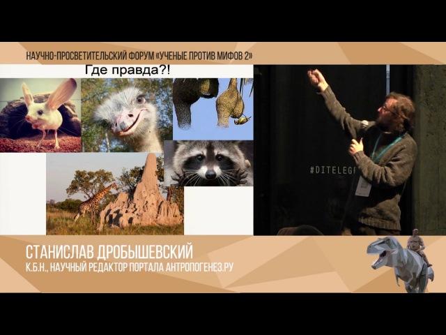 Ученые против мифов 2 10 Станислав Дробышевский Мифы о Пупе Земли на Вершине Эволюции