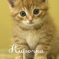 Кира это невероятное чудо))))))))