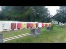 Bees dadant blatt Apis mellifera carnica