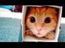 Приколы с Котами - Смешные коты и кошки 2017 Смешное Видео Корпорация Зла